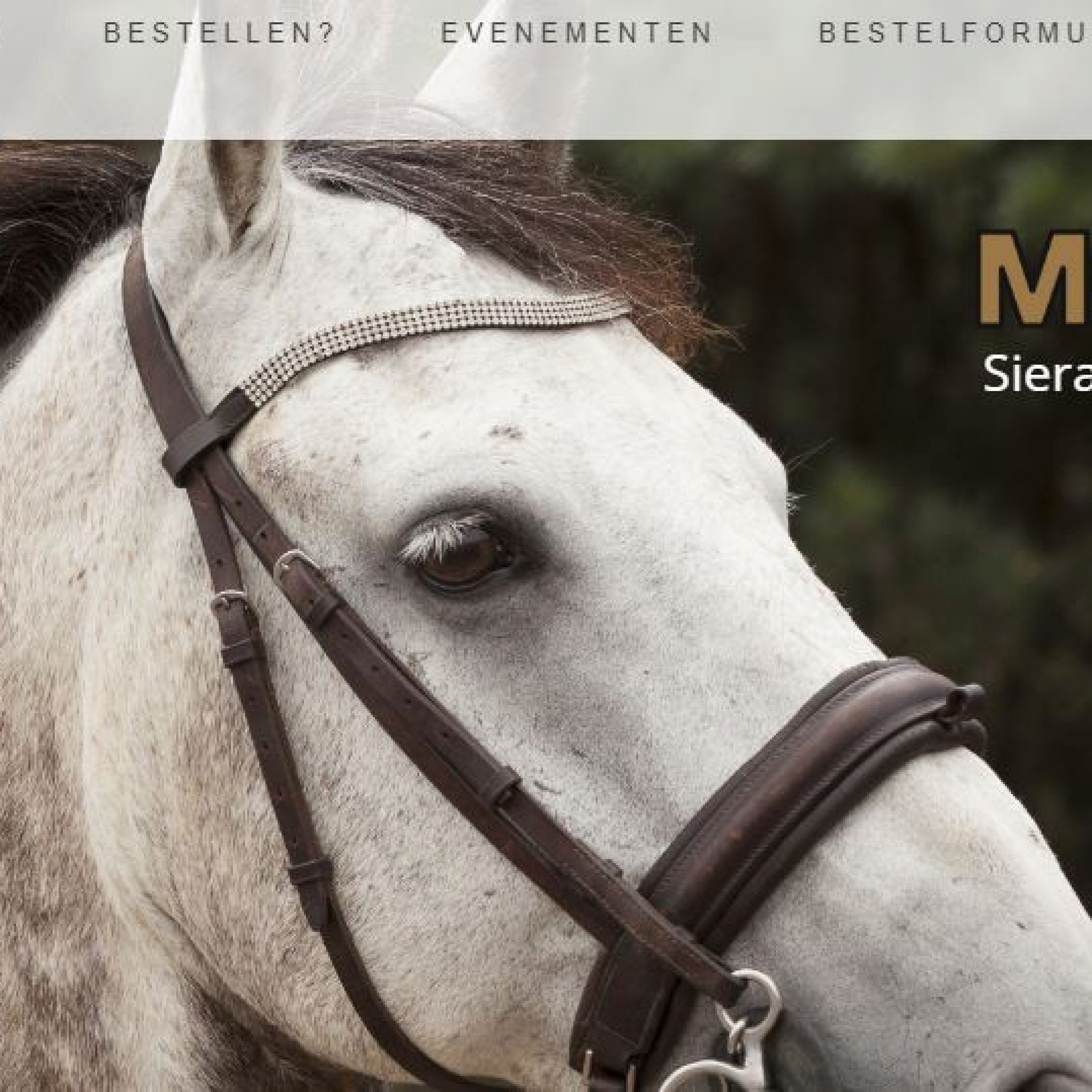 Website ontwerp Veghel